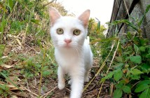 好奇心旺盛な子猫