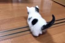 探索する子猫