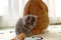 寄り添う子猫