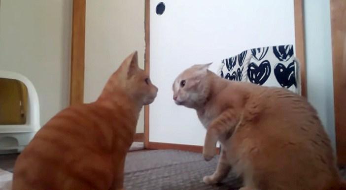 猫の置物と対峙する猫