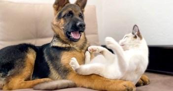 仲良しな子犬と子猫