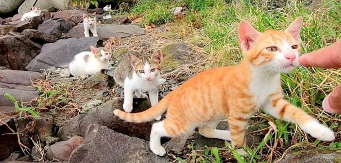 向かってくる子猫