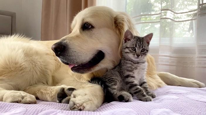 犬と仲良しな子猫