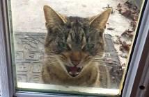ドアの外に現れた猫