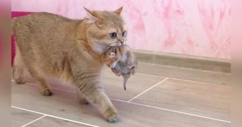 子猫とお引越しする母猫