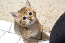遊びたい子猫