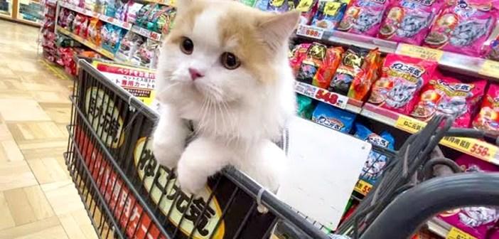 買い物する猫