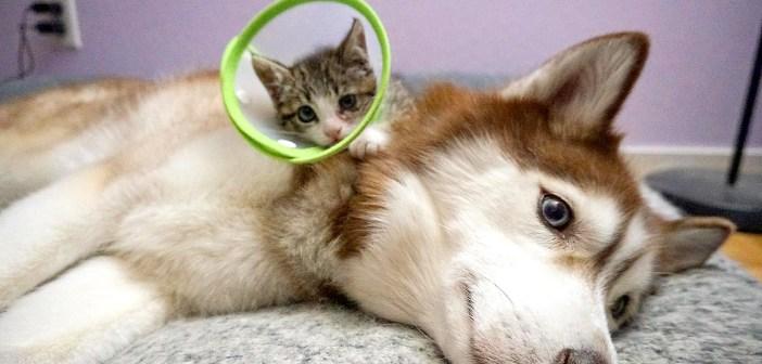 先住犬と保護子猫