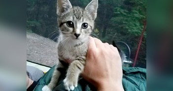 キャンプ中に現れた子猫