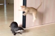 じゃれ合うカワウソと子猫