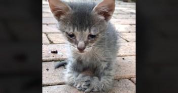 足が曲がった子猫