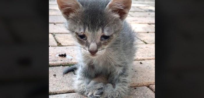 曲がった前足で懸命に近づいてきた子猫。保護の2週間後に見せてくれた幸せそうな笑顔に胸が熱くなる
