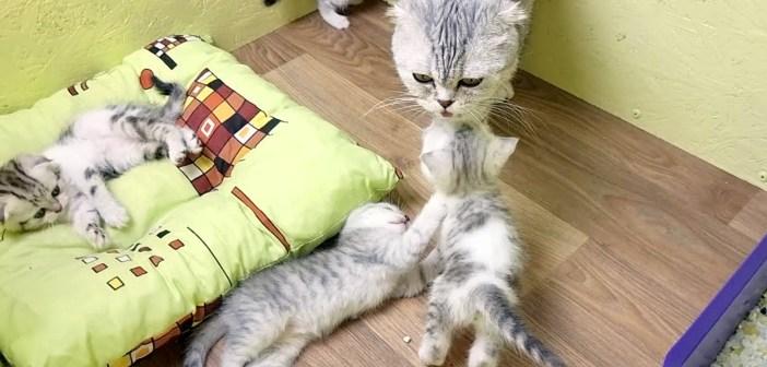猫の親子のミルクタイム