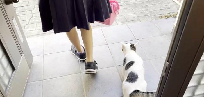 女の子をお見送りする猫