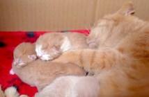 子猫達を抱きしめる猫