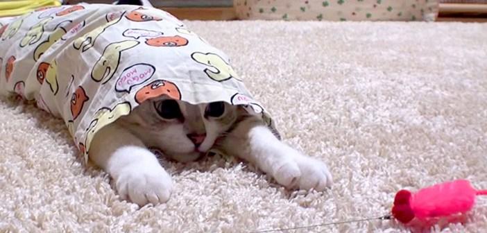 パジャマが大好きな猫