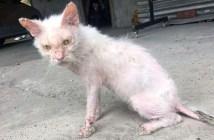 ボロボロの状態だった猫