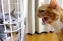 威嚇し合う猫達