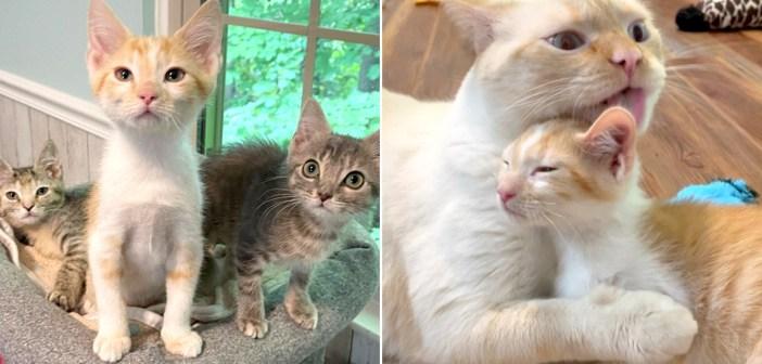 保護子猫達と先住猫