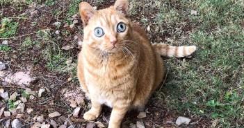 大きな目の猫