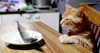 サンマと猫