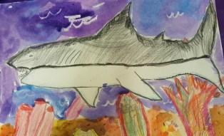 Age 6 Shark