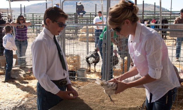 4-H results from the Eureka County Fair