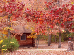 holiday island log cabins