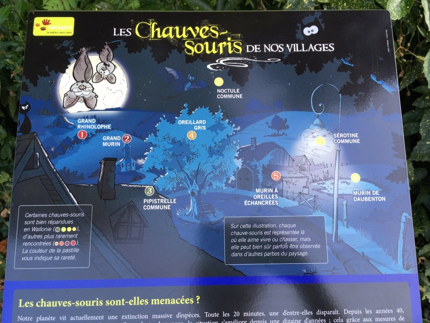 Promotion of an experience to educate about bats. Entirely in French, no Flemish at all.