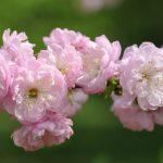 Кемеровская система ухода за пчёлами