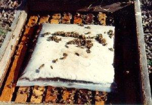 Подкормка пчёл (Взгляд из Техаса)