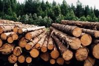 Евросоюз сможет покупать древесину из России по более низкой цене