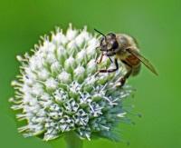 Университет Антверпена открывает гостиницы для пчел