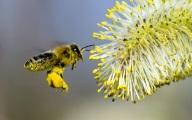 Европа создаст условия для пчел