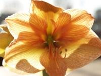33 вида орхидей порадуют любителей природы на эстонском острове Вилсанди