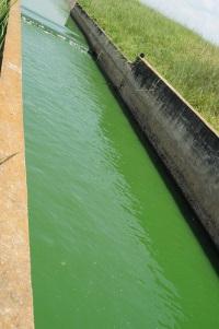Станция очистки сточных вод производит зеленое топливо в Андалусии