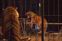 Дикие животные больше не будут участвовать в цирковых представлениях в Великобритании