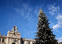Крупнейшая новогодняя елка в мире засияла в Италии