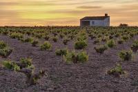 Древний виноградник обнаружен в Испании