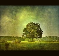Европейская Комиссия финансирует 225 новых зеленых проектов