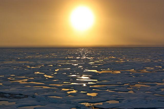Страны договорились не вылавливать рыбу в Арктике