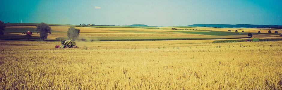 Андалусия стала лидером по выпуску сельскохозяйственной продукции