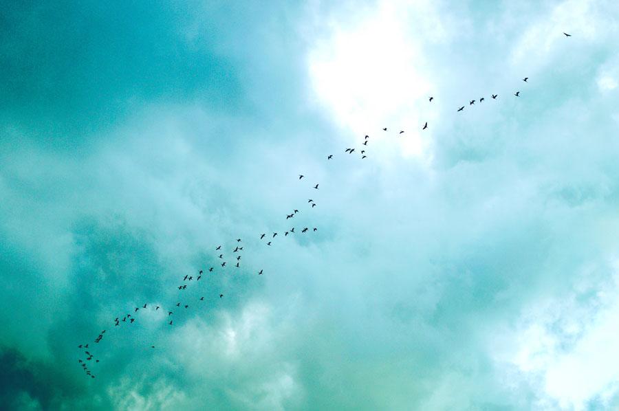 На 35% больше видов птиц появилось в румынском природном парке благодаря проекту Natura 2000