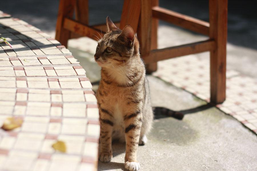 В итальянском городе плюшевые коты вышли на улицы против настоящих крыс