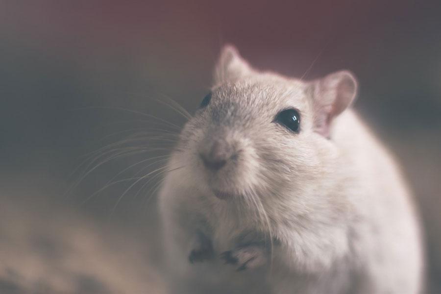 В Брюсселе сократят использование животных в лабораториях и университетах на 30%