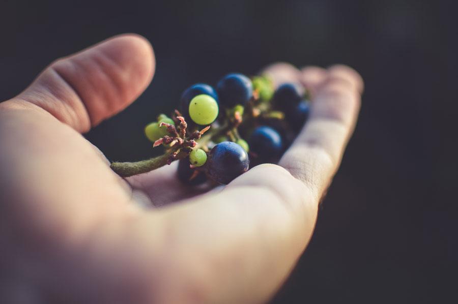 Португальские ученые придумали, как из отходов винного производства делать полезные продукты