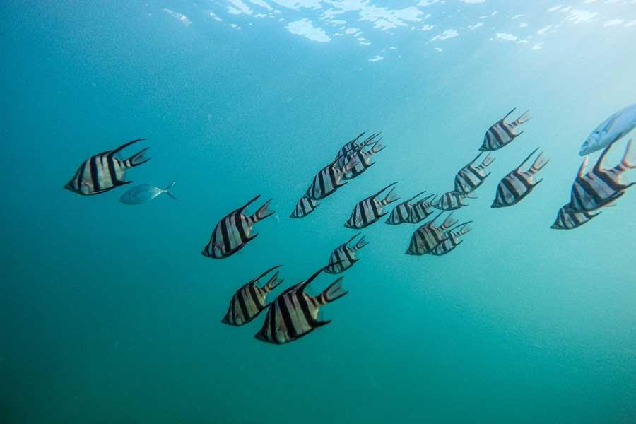 Площадь охраняемых морских территорий в ЕС выросла на 47% за 3 года