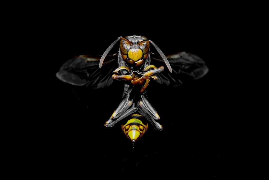 Инсектициды вызывают зависимость у шмелей и пчел