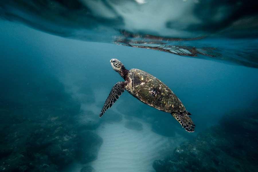 Итальянские ученые учат рыбаков спасать морских черепах