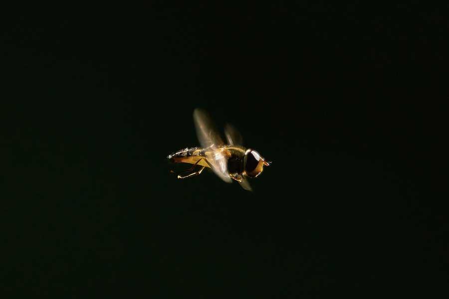 Жители Баварии призвали власти защитить пчел